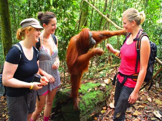 sumatra-orangoetan