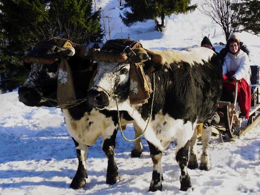 wintersport vogezen 2