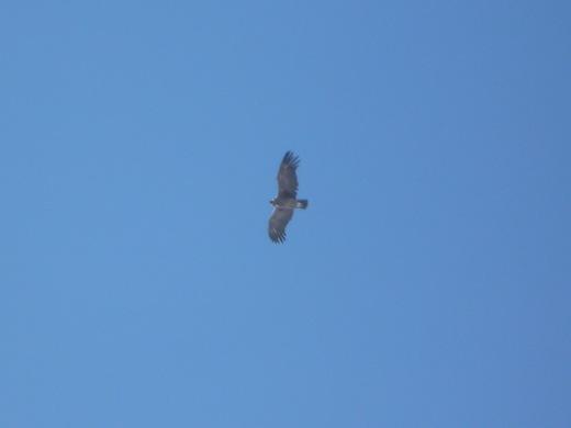 Een condor volgt de groep op weg naar de top.