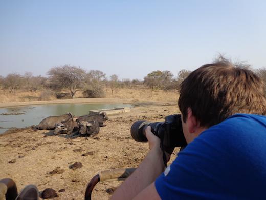 bizons-zuid-afrika