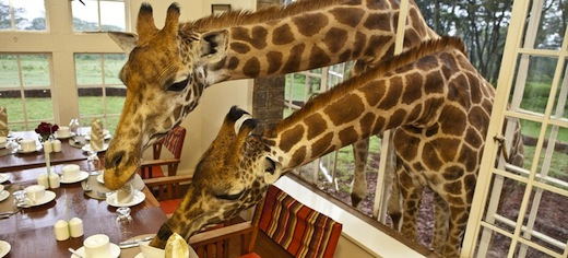 giraffe-manor-kenia-1
