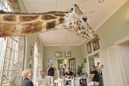 giraffe-manor-kenia-3
