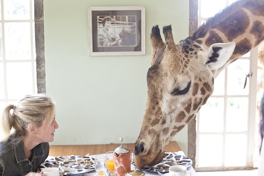 Foto's: The Giraffe Manor