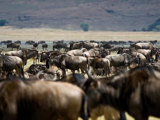 grote-trek-kenia-tanzania