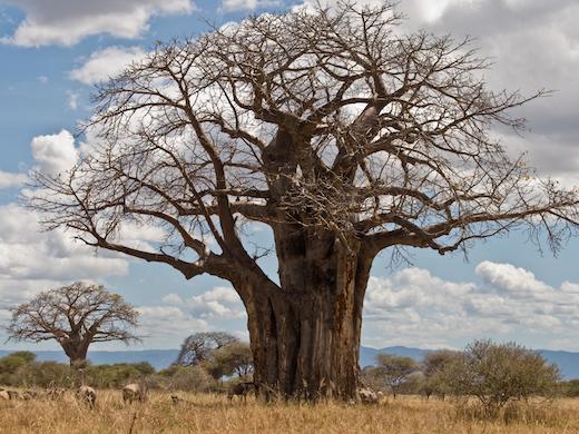 savanne-kenia-tanzania