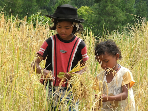 kinderen-indonesie