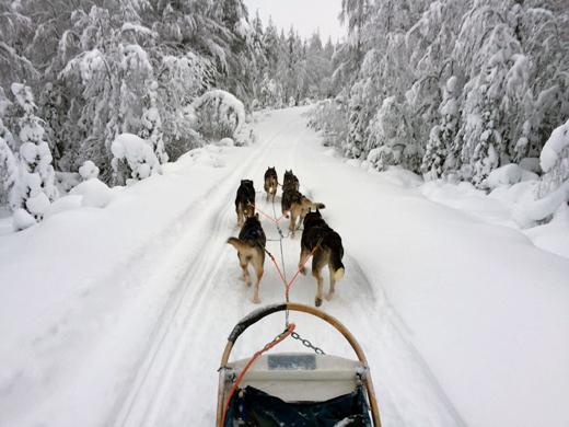 huskysledetocht-ruka-finland