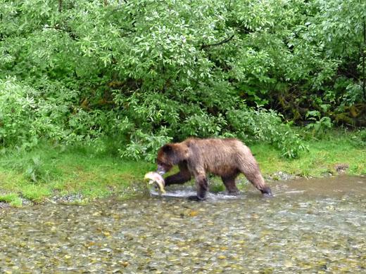 canada-vakantie-grizzly-stewart-hyder