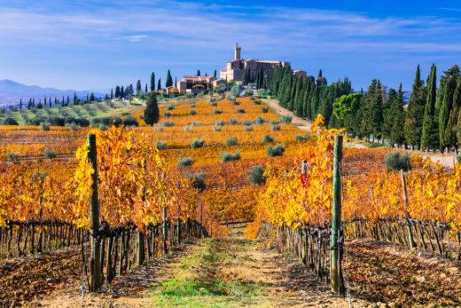 Brunello di Montalcino wijngaard
